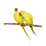 Ver Razas de Aves