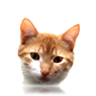 Ver Razas de Gatos