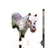 Ver Razas de Equinos