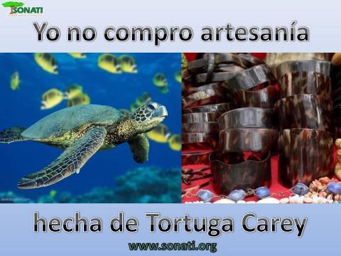 Animales en Peligro de Extincion (Tortuga Carey)