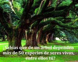 - DE UN ÁRBOL DEPENDES TÚ ... Y MÁS DE 50 ESPECIES DE SERES VIVOS!!