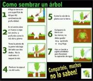 Como sembrar un árbol?