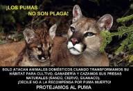 Los pumas no son una Plaga