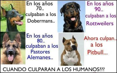 Animales Peligrosos!!!!